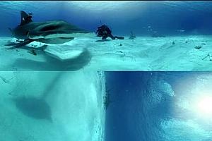 大锤头鲨遭遇战国家地理360°VR全景视频下载 (2021)【上下格式】