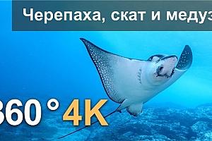 360°VR视频:海洋世界:潜水龟,斜坡和水母4K水下视频 俄罗斯 (2021)