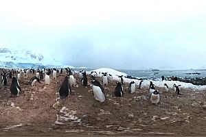 VR360°全景视频:国家地理:探索南极企鹅风景 VR视频下载
