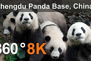 360°全景VR视频:《中国成都熊猫基地》 2K VR全景视频免费下载(2021)