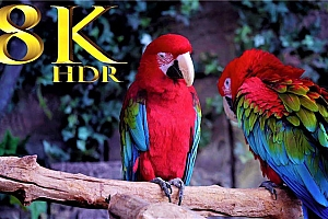 【4K60帧】超高清野生鸟类收藏 / 作者:8K VIDEOS HDR 60FPS (非3D)