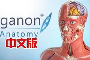 Oculus Quest 游戏《3D Organon VR 人体解剖学VR》3D Organon VR Anatomy 2021 VR
