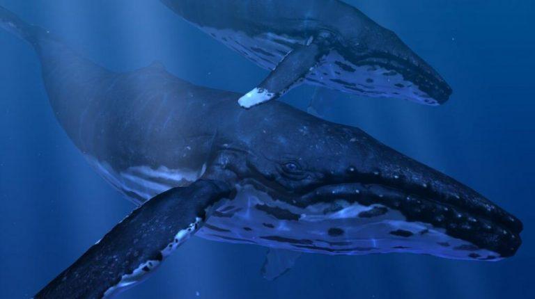 Oculus Quest版《Ocean Rift》海洋裂谷